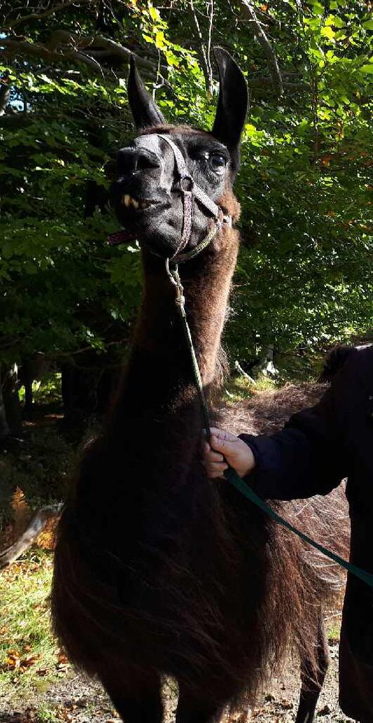 Llama 2 only