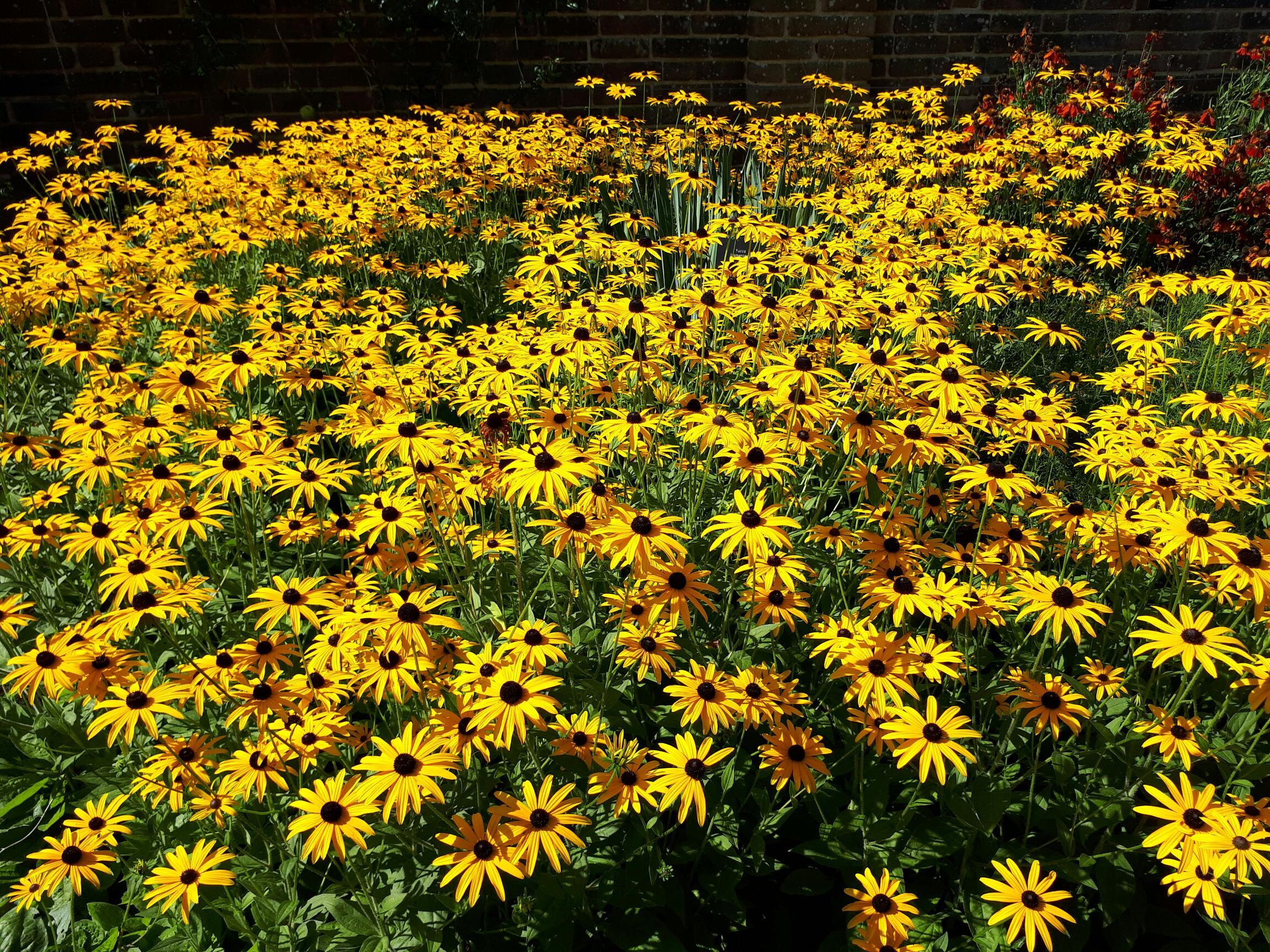 Flowers at Wakehurst